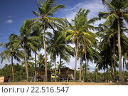 Купить «Beach huts among palm trees quiet Agonda Beach south Goa India.», фото № 22516547, снято 18 января 2019 г. (c) age Fotostock / Фотобанк Лори