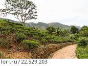 Купить «road and tea plantation field on Sri Lanka», фото № 22529203, снято 16 февраля 2016 г. (c) Syda Productions / Фотобанк Лори
