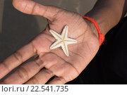 Мужчина держит перевёрнутую маленькую мокрую живую морскую звезду на открытой ладони. Стоковое фото, фотограф Алексей Безрук / Фотобанк Лори