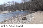 Купить «Весенний лес на берегу реки», видеоролик № 22545751, снято 13 февраля 2016 г. (c) Олег Хархан / Фотобанк Лори