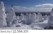 Красивая зимняя страна чудес с заснеженными деревьями необычной формы. Стоковое видео, видеограф Евгений Ткачёв / Фотобанк Лори