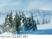 Купить «Icy snowy fir trees on winter hill.», фото № 22601451, снято 30 января 2016 г. (c) Юрий Брыкайло / Фотобанк Лори