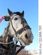 Купить «Морда лошади в упряжке крупным планом», фото № 22606191, снято 8 марта 2016 г. (c) Григорий Писоцкий / Фотобанк Лори