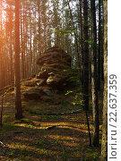 Купить «Старый камень, валун среди деревьев на восход солнца в лесу», фото № 22637359, снято 18 августа 2009 г. (c) Зезелина Марина / Фотобанк Лори