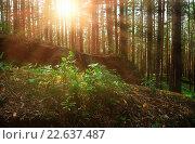Купить «Летний пейзаж - лес на восходе солнца», фото № 22637487, снято 18 августа 2009 г. (c) Зезелина Марина / Фотобанк Лори