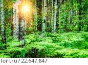 Купить «Смешанный лес с берёзами и папоротником», фото № 22647847, снято 18 января 2019 г. (c) Зезелина Марина / Фотобанк Лори