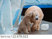 Белая медведица играет со своим детенышем в зоопарке. Стоковое фото, фотограф Дункель Артем / Фотобанк Лори