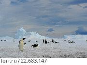 Купить «Императорские пингвины», фото № 22683147, снято 18 октября 2010 г. (c) Vladimir / Фотобанк Лори