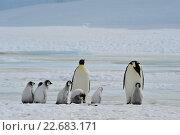Купить «Императорские пингвины с детенышами», фото № 22683171, снято 18 октября 2010 г. (c) Vladimir / Фотобанк Лори