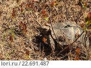 Купить «Черепаха», фото № 22691487, снято 22 апреля 2015 г. (c) nadegdaf / Фотобанк Лори
