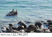 Купить «Две морские птицы на камне в океане», фото № 22740207, снято 16 августа 2018 г. (c) Евгений Дробитько / Фотобанк Лори