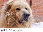 Портрет собаки. Стоковое фото, фотограф Светлана Швенк / Фотобанк Лори