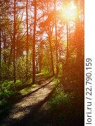 Купить «Тропинка в летнем лесу», фото № 22790159, снято 5 мая 2016 г. (c) Зезелина Марина / Фотобанк Лори