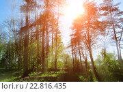Купить «Солнечные лучи в лесу», фото № 22816435, снято 5 мая 2016 г. (c) Зезелина Марина / Фотобанк Лори