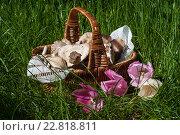 Весенний натюрморт. Стоковое фото, фотограф Татьяна Мирохина / Фотобанк Лори