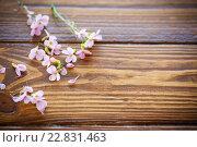 Купить «Красивые цветы сирени на столе», фото № 22831463, снято 25 апреля 2016 г. (c) Peredniankina / Фотобанк Лори