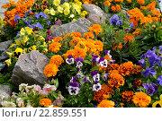 Купить «Декоративный цветник с камнями. Ландшафтный дизайн», фото № 22859551, снято 23 июля 2015 г. (c) Ирина Борсученко / Фотобанк Лори