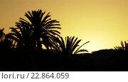 Купить «Silhouettes of palm trees against sunset», видеоролик № 22864059, снято 12 мая 2016 г. (c) BestPhotoStudio / Фотобанк Лори