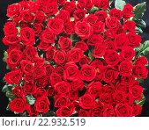 Купить «roses», фото № 22932519, снято 19 июня 2019 г. (c) easy Fotostock / Фотобанк Лори