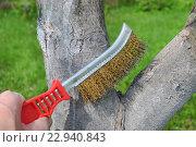 Купить «Чистка деревьев перед побелкой», эксклюзивное фото № 22940843, снято 4 мая 2016 г. (c) Юрий Морозов / Фотобанк Лори