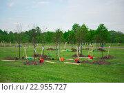 Купить «Посадка молодых деревьев», фото № 22955727, снято 15 августа 2018 г. (c) Екатерина Тимонова / Фотобанк Лори