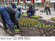 Купить «Посадка цветов на Чистопрудном бульваре в Москве», эксклюзивное фото № 22998563, снято 22 мая 2016 г. (c) Давид Мзареулян / Фотобанк Лори