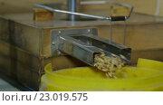 Купить «Эксперимент с кормом в био лаборатории», видеоролик № 23019575, снято 20 мая 2016 г. (c) Илья Насакин / Фотобанк Лори