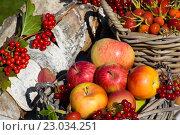 Яблоки в корзине на столе. Стоковое фото, фотограф Елена Лобовикова / Фотобанк Лори