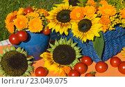 Осенний натюрморт с подсолнухами, помидорами на столе. Стоковое фото, фотограф Елена Лобовикова / Фотобанк Лори