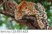 Леопард. Стоковая иллюстрация, иллюстратор Елена Саморядова / Фотобанк Лори
