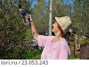 Купить «Пожилая женщина-садовод подрезает электрическим триммером куст жасмина весной в солнечный день», фото № 23053243, снято 8 мая 2016 г. (c) Максим Мицун / Фотобанк Лори