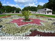 Купить «Цветочная клумба в парке «Сокольники». Красивый орнамент из цветов с пальмой», эксклюзивное фото № 23058455, снято 5 августа 2015 г. (c) lana1501 / Фотобанк Лори