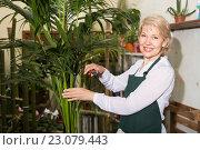 Купить «Female florist standing amongst plants», фото № 23079443, снято 28 мая 2020 г. (c) Яков Филимонов / Фотобанк Лори