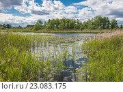 Лебяжье озеро. Стоковое фото, фотограф Виктор Евстратов / Фотобанк Лори