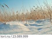 Купить «Зимний пейзаж», фото № 23089999, снято 20 октября 2018 г. (c) Зезелина Марина / Фотобанк Лори