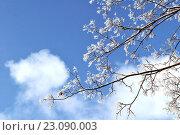 Снег на ветках дерева зимой. Стоковое фото, фотограф Зезелина Марина / Фотобанк Лори