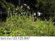 Купить «Border with perennial flowers including yellow Rudbeckia - Coneflowers in private backyard country garden in summer, Jardin du Grand Portage garden, Saint...», фото № 23125847, снято 19 августа 2012 г. (c) age Fotostock / Фотобанк Лори