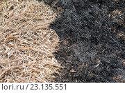 Купить «Черное и белое. Граница сгоревшей и сухой травы», фото № 23135551, снято 12 апреля 2016 г. (c) Pukhov K / Фотобанк Лори