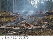 Купить «Лес вырубили и сжигают», фото № 23135575, снято 19 апреля 2016 г. (c) Pukhov K / Фотобанк Лори
