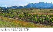 Красивые зеленые виноградники на полях в горах Крыма. Стоковое фото, фотограф Юлия Машкова / Фотобанк Лори