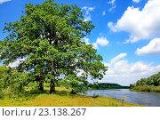 Роскошные дубы на реке. Стоковое фото, фотограф Андрей Силивончик / Фотобанк Лори