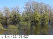 Купить «Ивы и тополя в воде», эксклюзивное фото № 23138627, снято 30 апреля 2016 г. (c) Анатолий Матвейчук / Фотобанк Лори