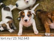 Маленькие щенки в приюте. Стоковое фото, фотограф Okssi / Фотобанк Лори