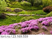 Купить «Красивый ландшафт с красивыми цветами», фото № 23169559, снято 4 мая 2016 г. (c) Наталья Двухимённая / Фотобанк Лори