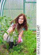 Купить «Девушка - садовод улыбается и держит молодую морковь на грядке в теплице на дачном участке», фото № 23182647, снято 19 июня 2016 г. (c) Максим Мицун / Фотобанк Лори