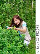 Купить «Девушка-садовод сидит на корточках, улыбается и подрезает секатором кустарник на дачном участке», фото № 23182675, снято 19 июня 2016 г. (c) Максим Мицун / Фотобанк Лори