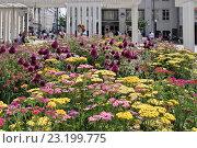 Купить «Москва. Клумба на Триумфальной площади», эксклюзивное фото № 23199775, снято 4 июля 2016 г. (c) Илюхина Наталья / Фотобанк Лори