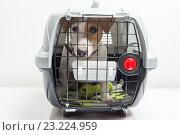Собака в клетке для перевозки. Стоковое фото, фотограф Никита Буйда / Фотобанк Лори