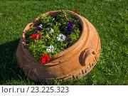 Купить «Стилизованная под греческий пифос кадка для цветов на газоне», фото № 23225323, снято 3 июля 2016 г. (c) Борис Панасюк / Фотобанк Лори