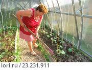 Пенсионерка работает в теплице. Стоковое фото, фотограф Инесса Гаварс / Фотобанк Лори